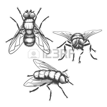 450x450 Hand Drawn Flies. Insect With Wing, Biology And Sketch, Vector