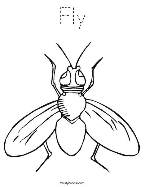 468x605 Peaceful Design Fruit Fly Coloring Page Drosophila Free Book