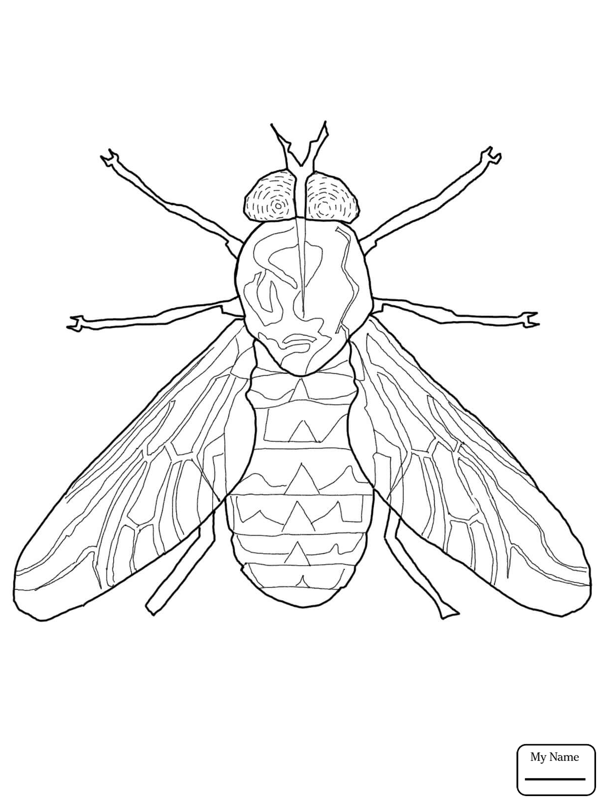 1224x1632 Coloring Pages Fly Fruit Fly Insects