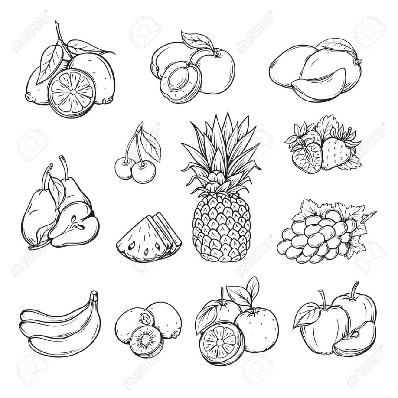 1300x1300 Vector Set Of Different Hand Drawn Fruit , Black Line Isolation