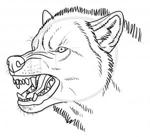 302x275 How to Draw an Angry Wolf, Step by Step, forest animals, Animals