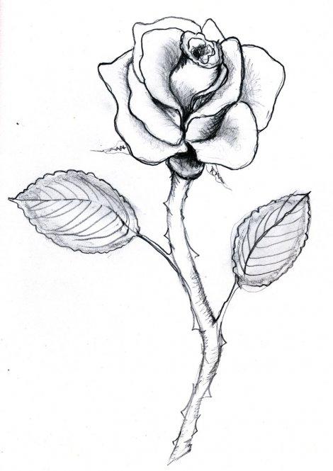 Full Rose Drawing