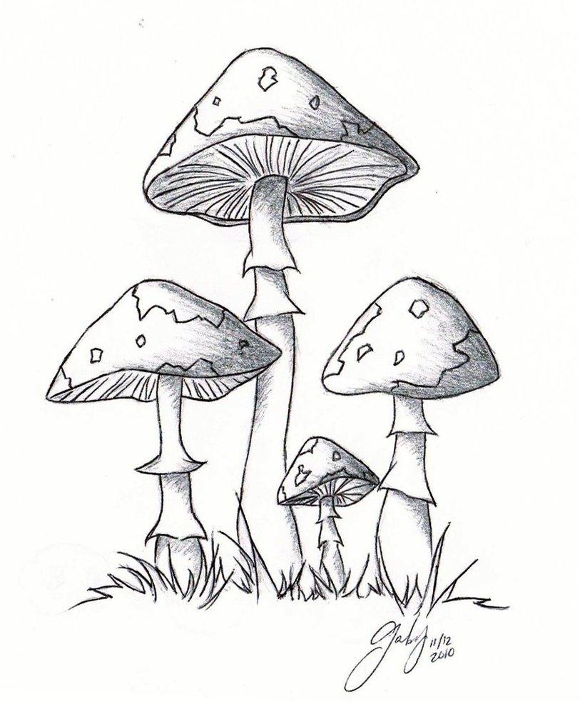 Fungus Drawing