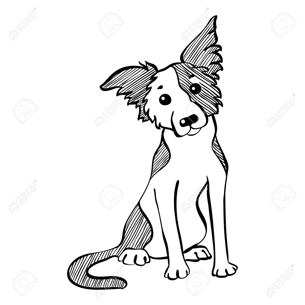 1300x1300 Sketch Funny Dog Border Collie Breed Sitting Hand Drawing Vector