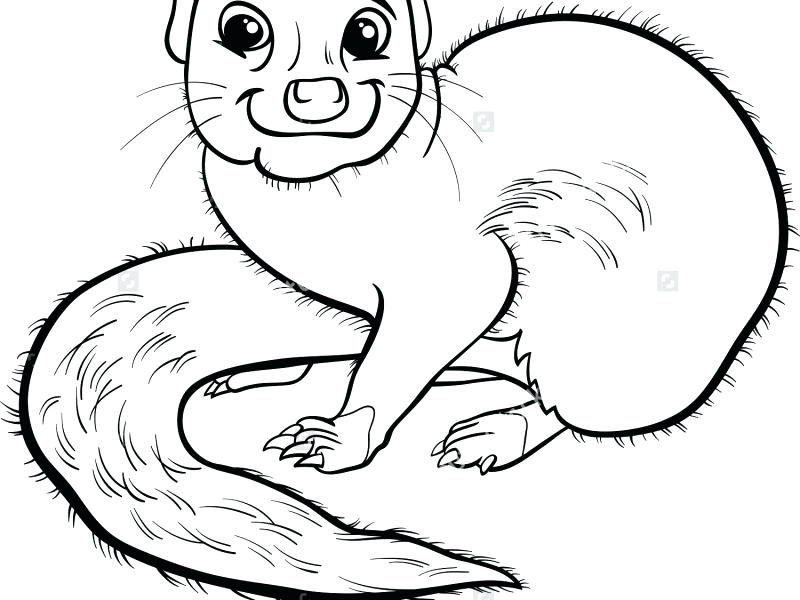 800x600 Funny Animal Coloring Pages Download Mongoose Animal Coloring