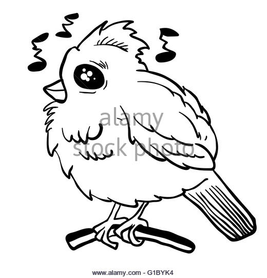 520x540 Funny Looking Bird Stock Photos Amp Funny Looking Bird Stock Images