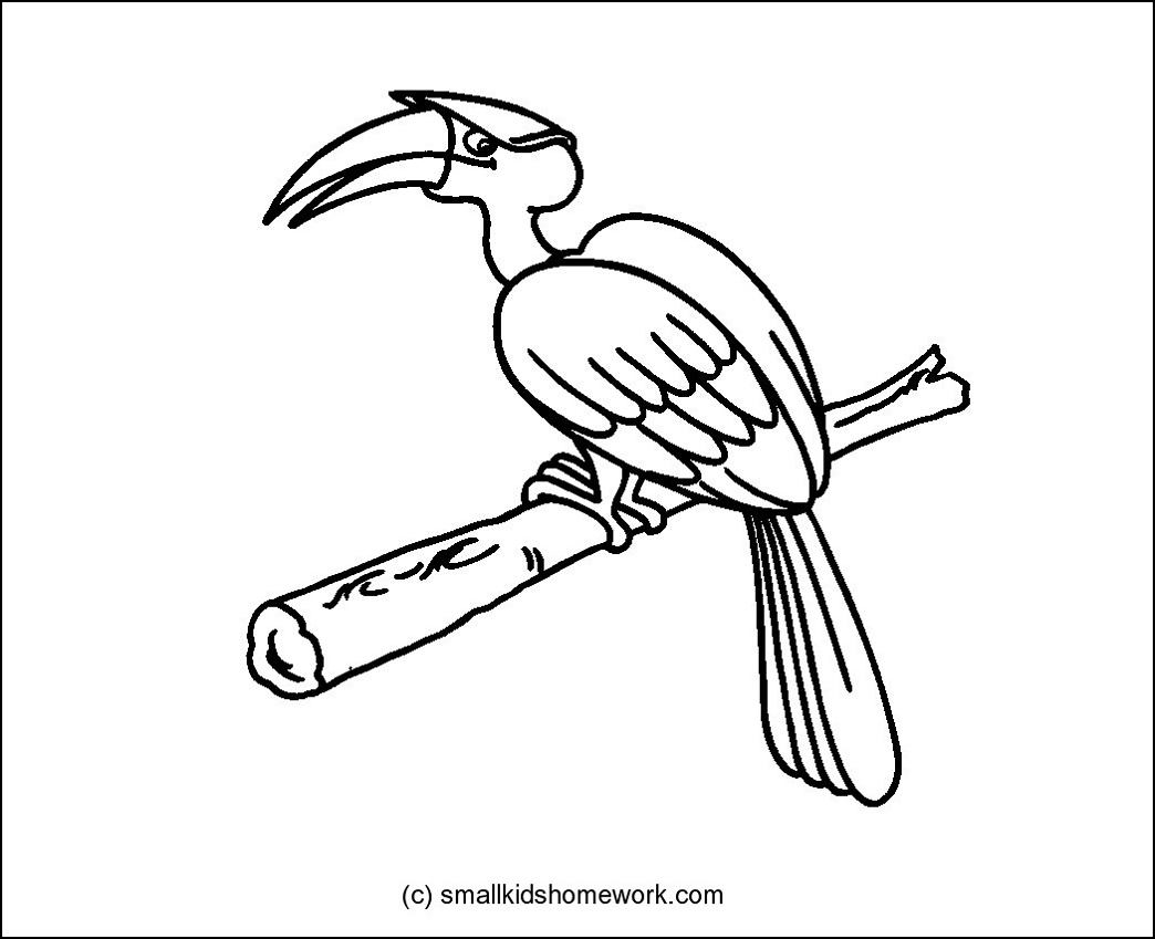 1044x849 Hornbill Bird Outline And Coloring Picture With Interesting Facts