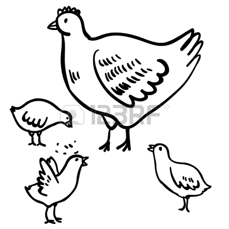 450x450 Vector Illustration With Four Doodle Cute Chicken And Hen