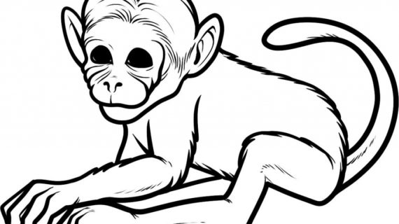 570x320 How To Draw Monkeys Drawing Tutorial How To Draw A Funny Monkey
