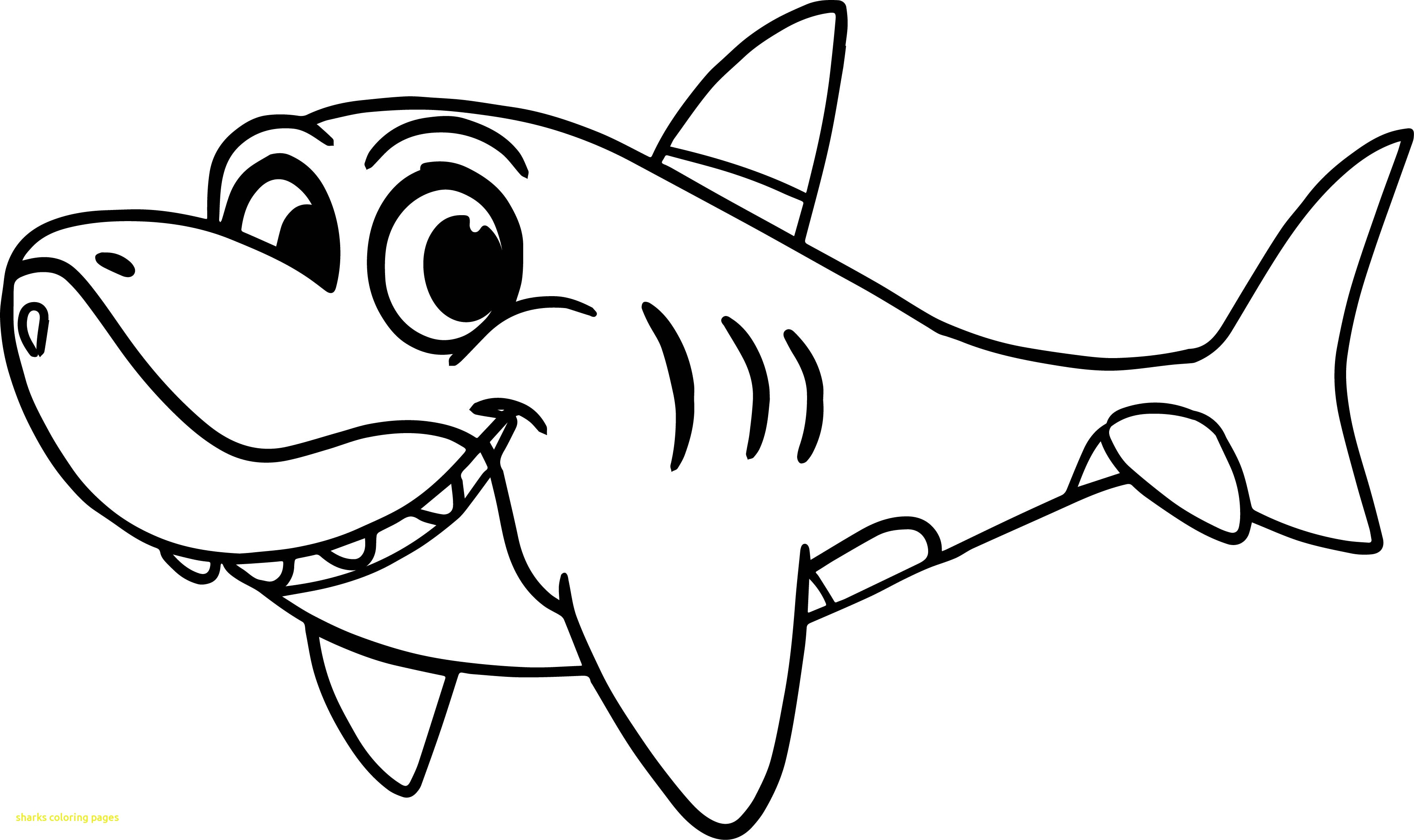 How To Draw A Shark Coloring Pages