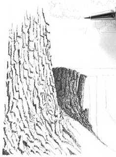 236x321 Step 04 Bark Techniques How To Draw Trees, Bark, Twigs, Leaves