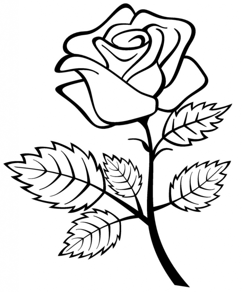 851x1024 Rose Flower Drawing Games