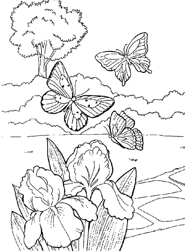 651x885 Vegetable Garden Coloring Pages Garden Drawing For Kids Free