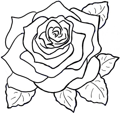 500x473 The Best Roses Drawing Tutorial Ideas On How