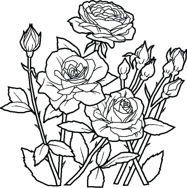 600x603 Coloring Flower Pages