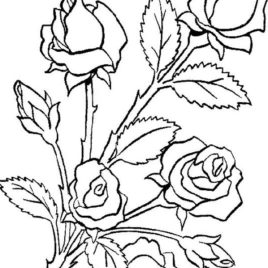 268x268 Rose Garden Coloring Page Kids Drawing And Pages