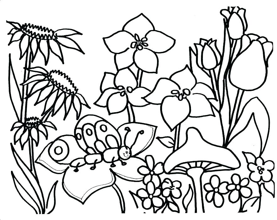 882x700 Vegetable Garden Coloring Pages Garden Drawing For Kids Free