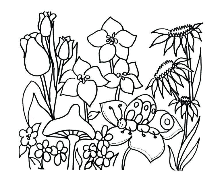 780x644 Flower Garden Outline Financeintl.club