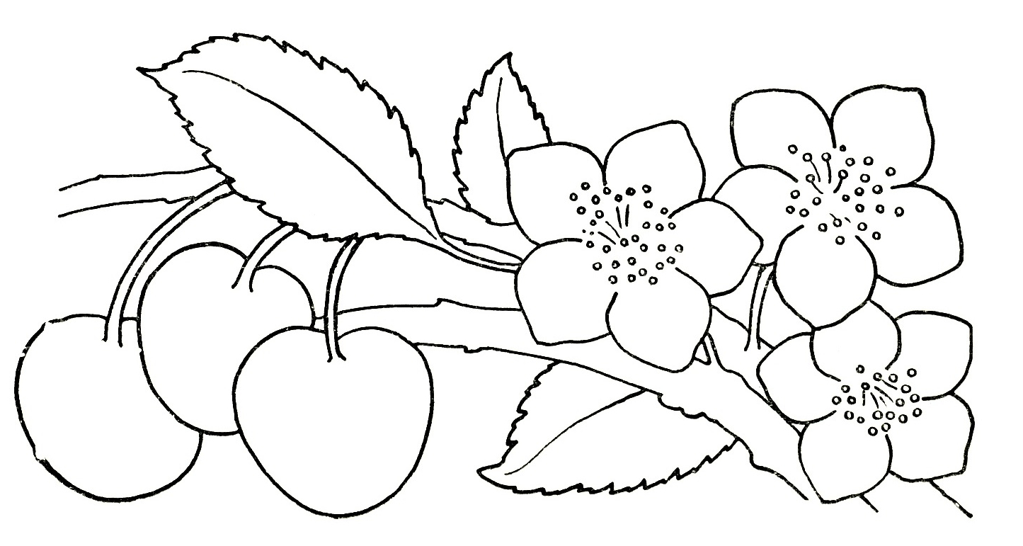 1445x771 Drawing Garden Flowers For Kids Flowers Drawing For Kids Free