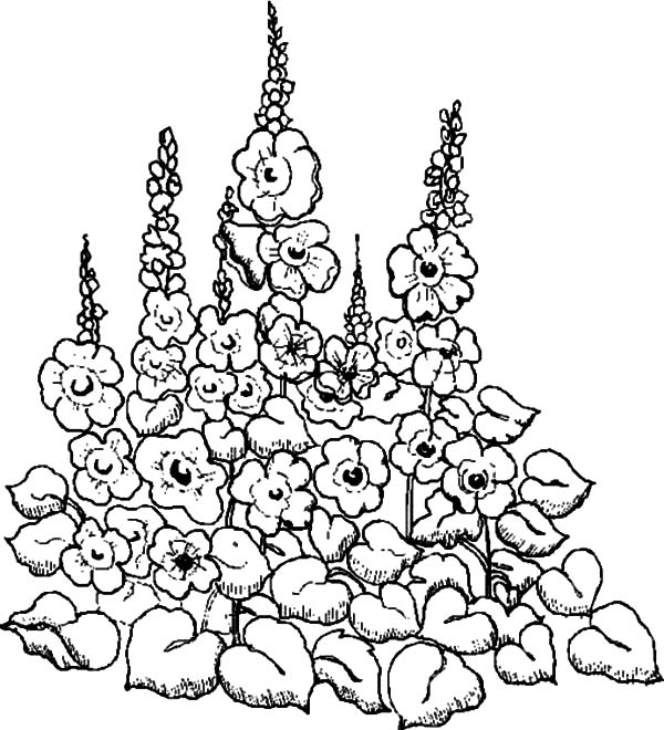 600x660 Drawing Garden Of Flower Coloring Pages Color Luna