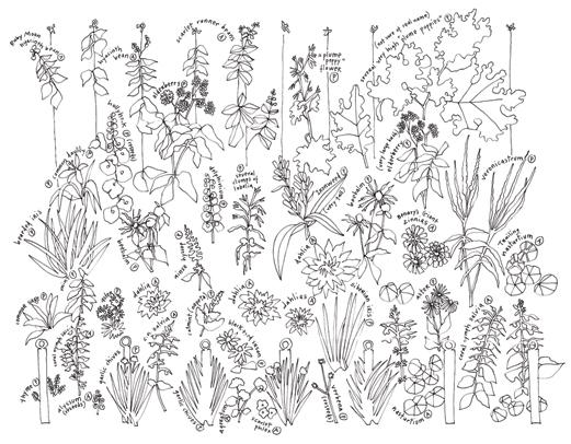 521x406 Flower Garden Drawing