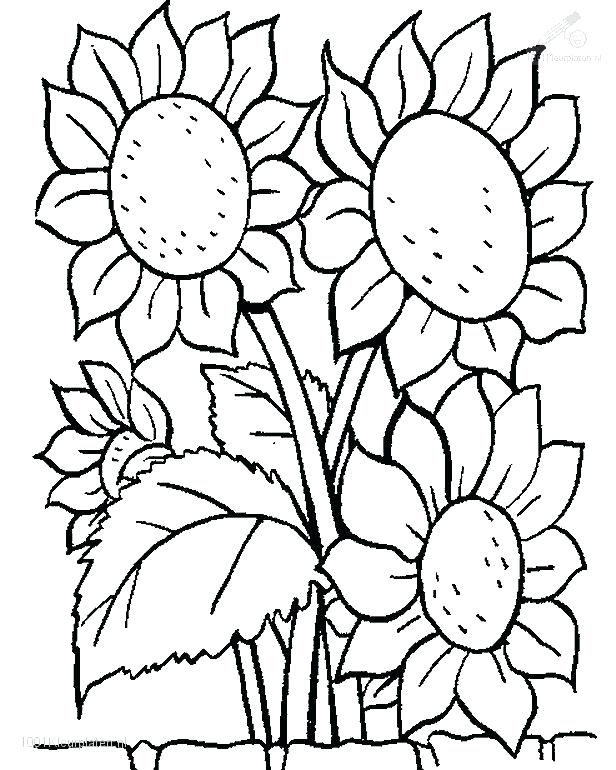 616x770 Flowers Coloring Pages Garden Flowers Coloring Pages 5 Interesting