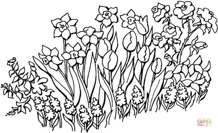 720x438 Flowers In The Garden Coloring Page Free Printable Coloring Pages