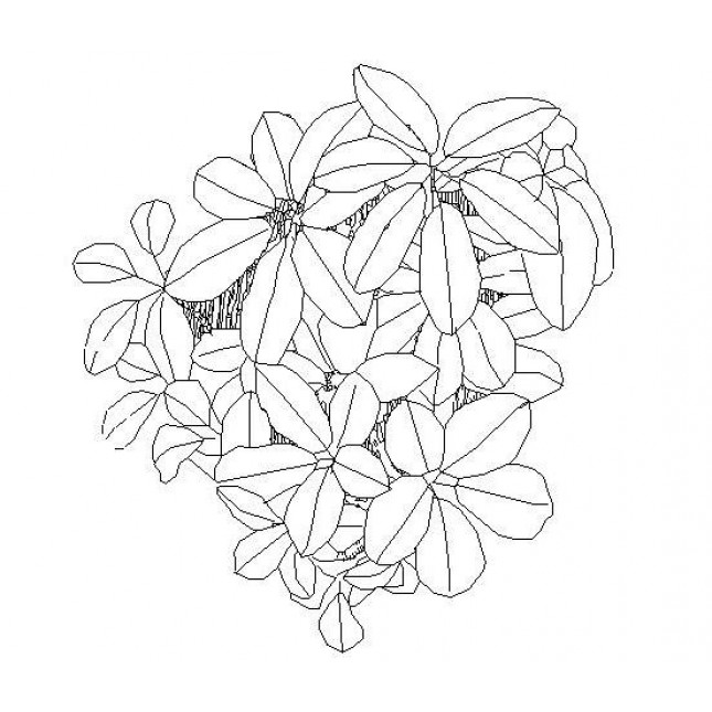 645x645 Free Cad Dwg Of A Flower Plan View