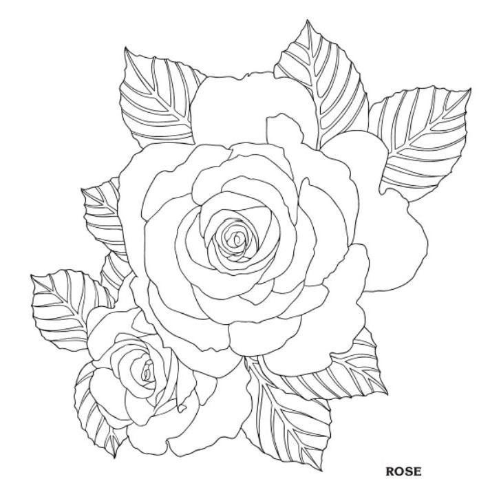 712x728 Rose