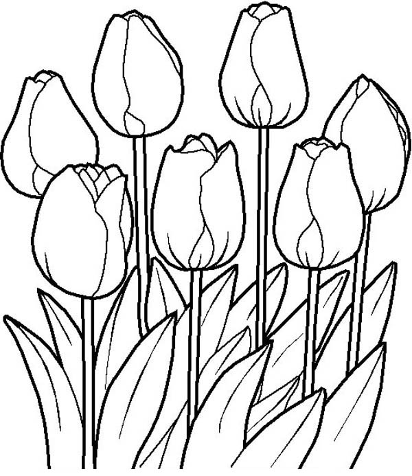 600x693 Tulips In The Garden Flower Bouquet Coloring Page Color Luna