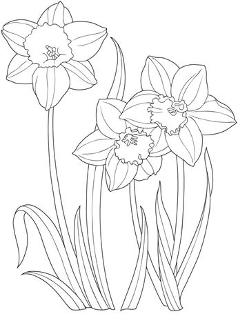345x455 Welcome To Dover Publications