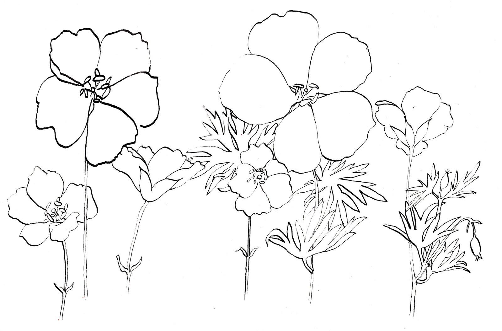 1600x1055 Beautiful Flower Garden Drawing Ideas