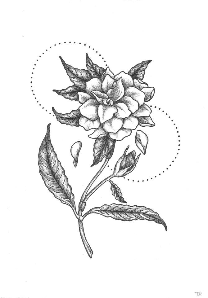 Gardenia Drawing