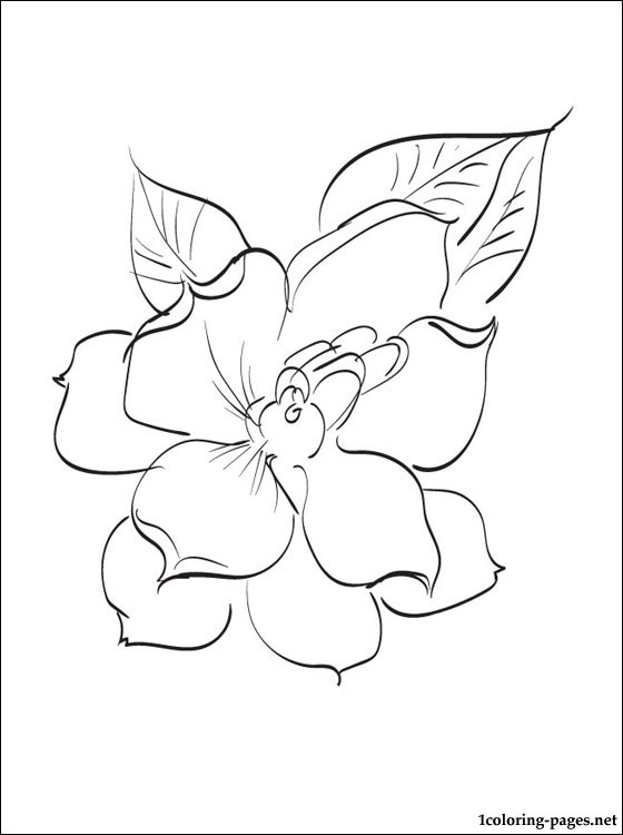 560x750 Gardenia Coloring Page For Free Pages