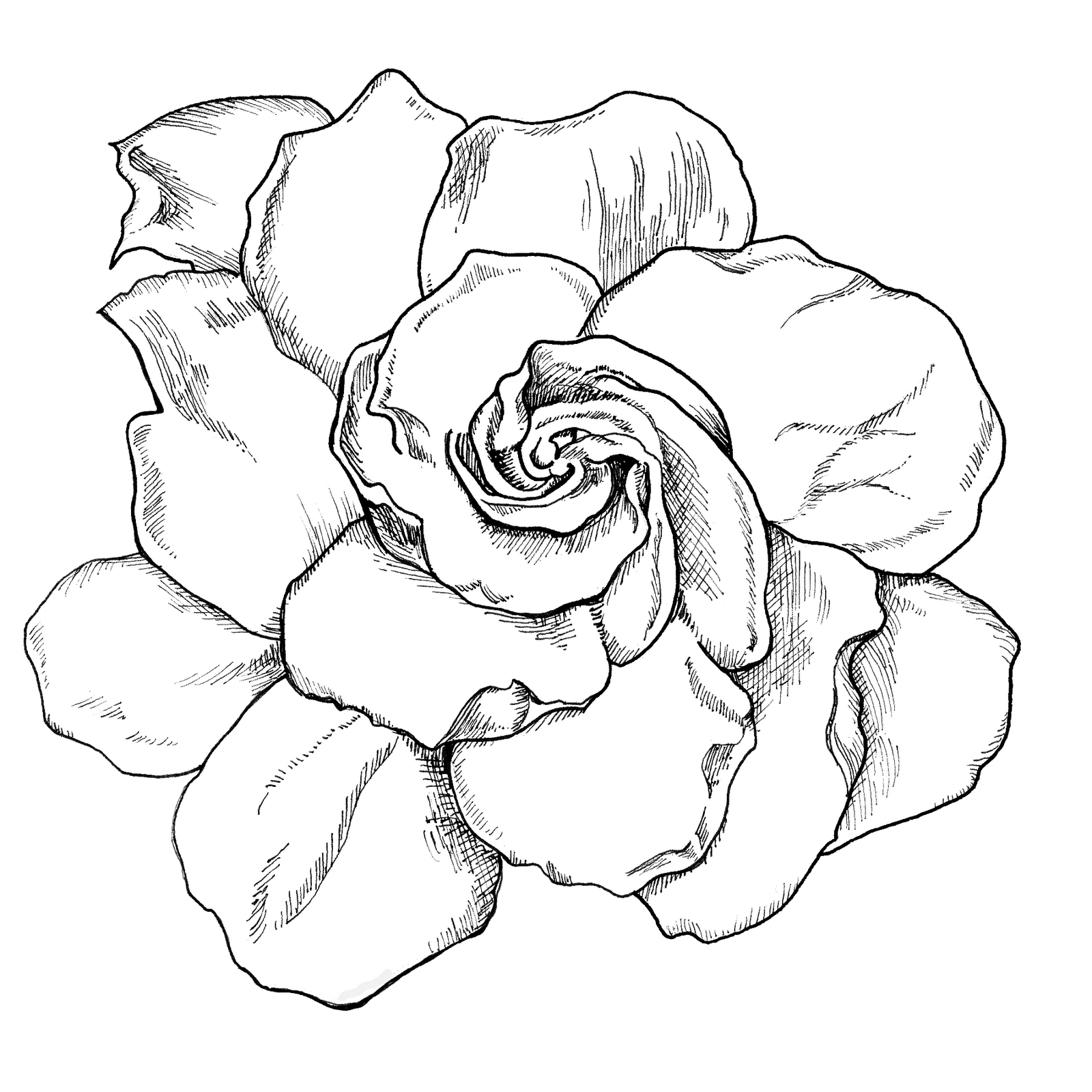 1600x1600 Gardenia Drawing Live Life Creatively Project 365