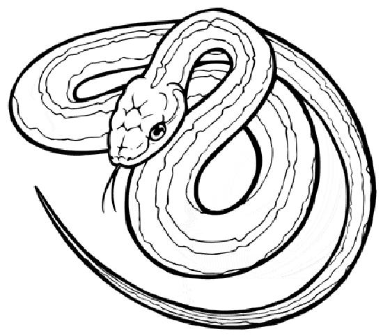 Garter Snake Drawing at GetDrawings.com | Free for personal use ...