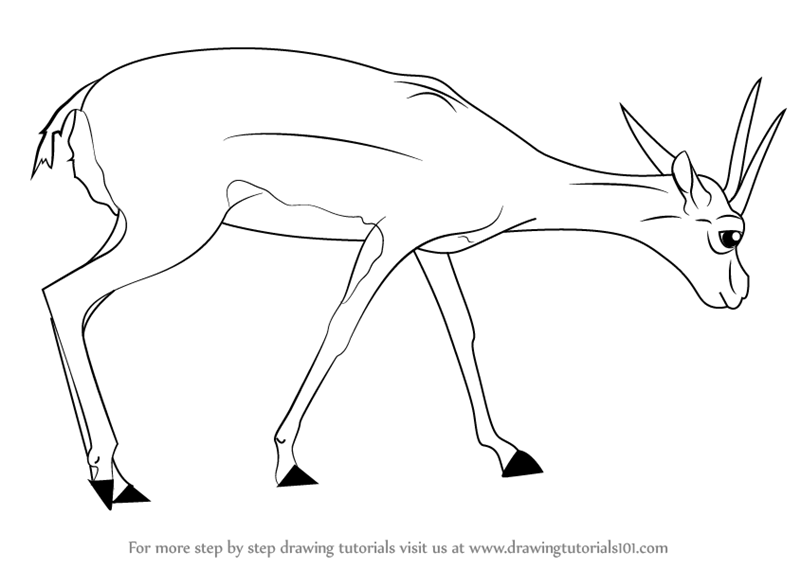 800x569 Learn How To Draw A Gazelle (Wild Animals) Step By Step Drawing