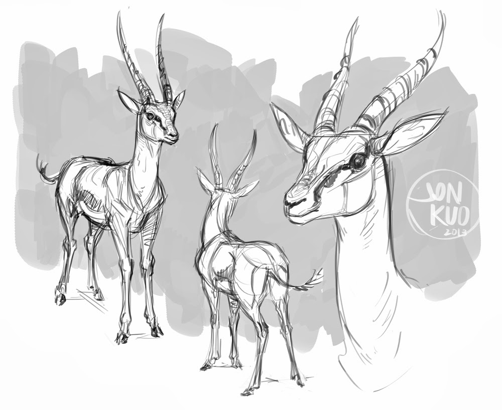 1000x817 Animal Art And Demos Gazelle Studies Animal Art