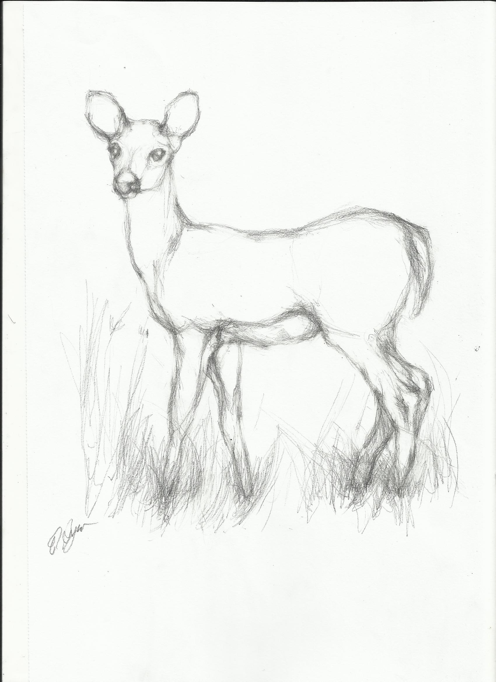 1700x2338 Wild Animals Pencil Sketch Simple Line Drawings Of Deer