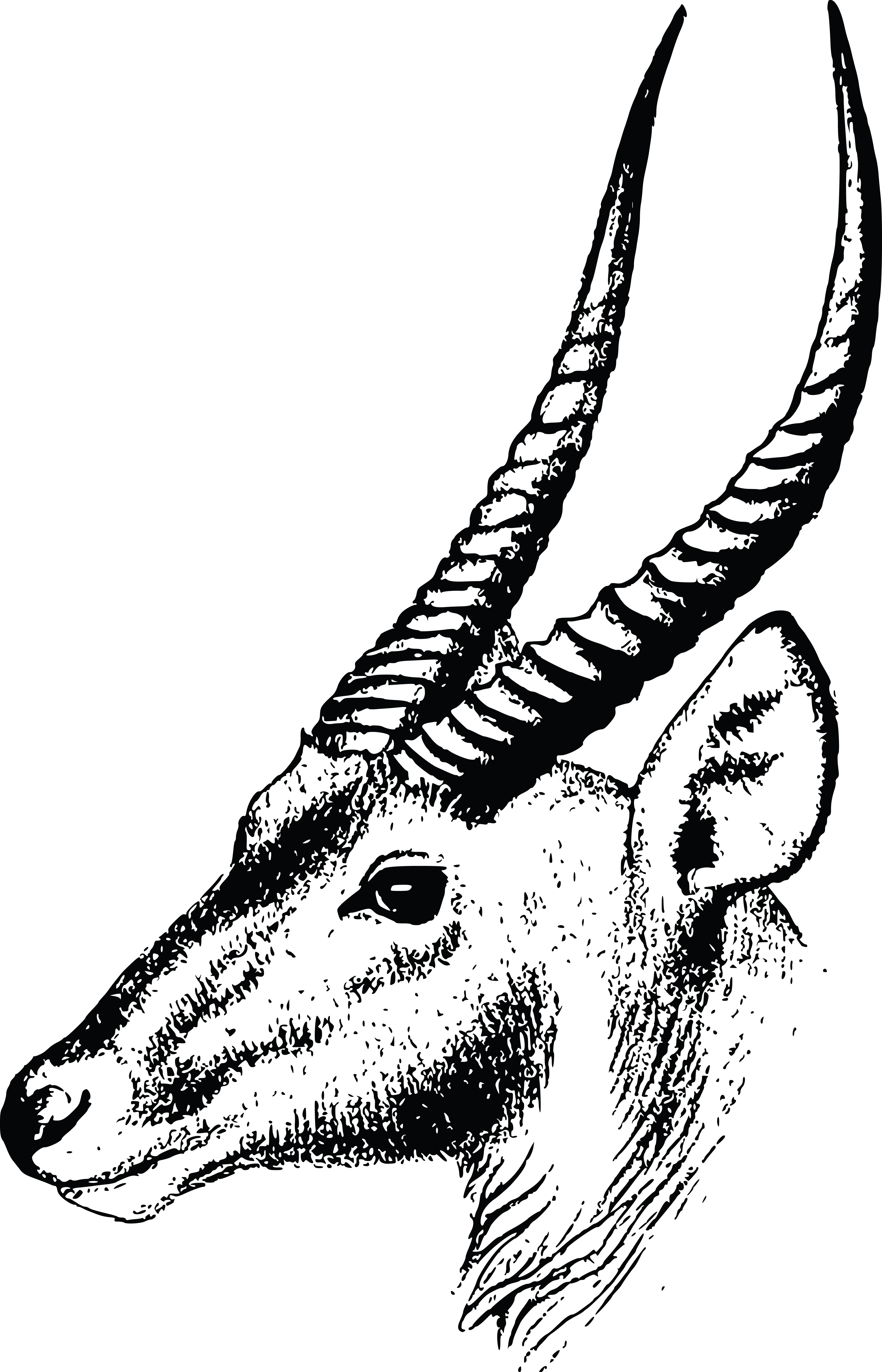 4000x6223 Clipart Of A Gazelle