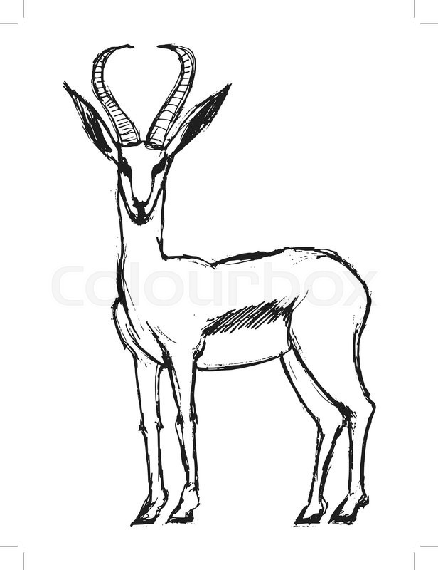 616x800 Gazelle, Illustration Of Wildlife, African, Safari, Zoo, Mammal