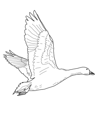 360x480 Flying Snow Goose Coloring Page Free Printable Coloring Pages