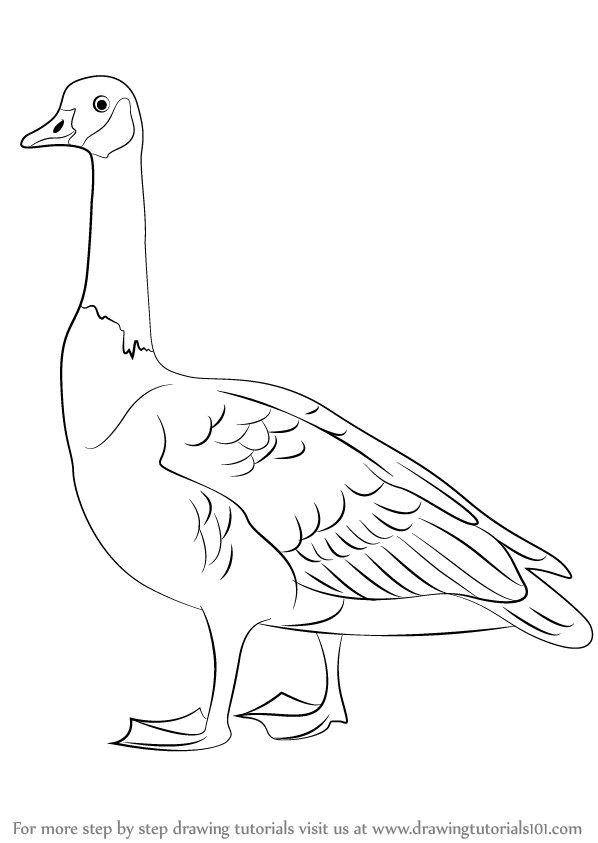 598x843 Learn How To Draw A Canada Goose (Birds) Step By Step Drawing
