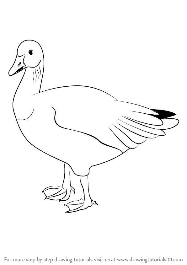 596x844 Learn How To Draw A Snow Goose (Sea Water Animals) Step By Step