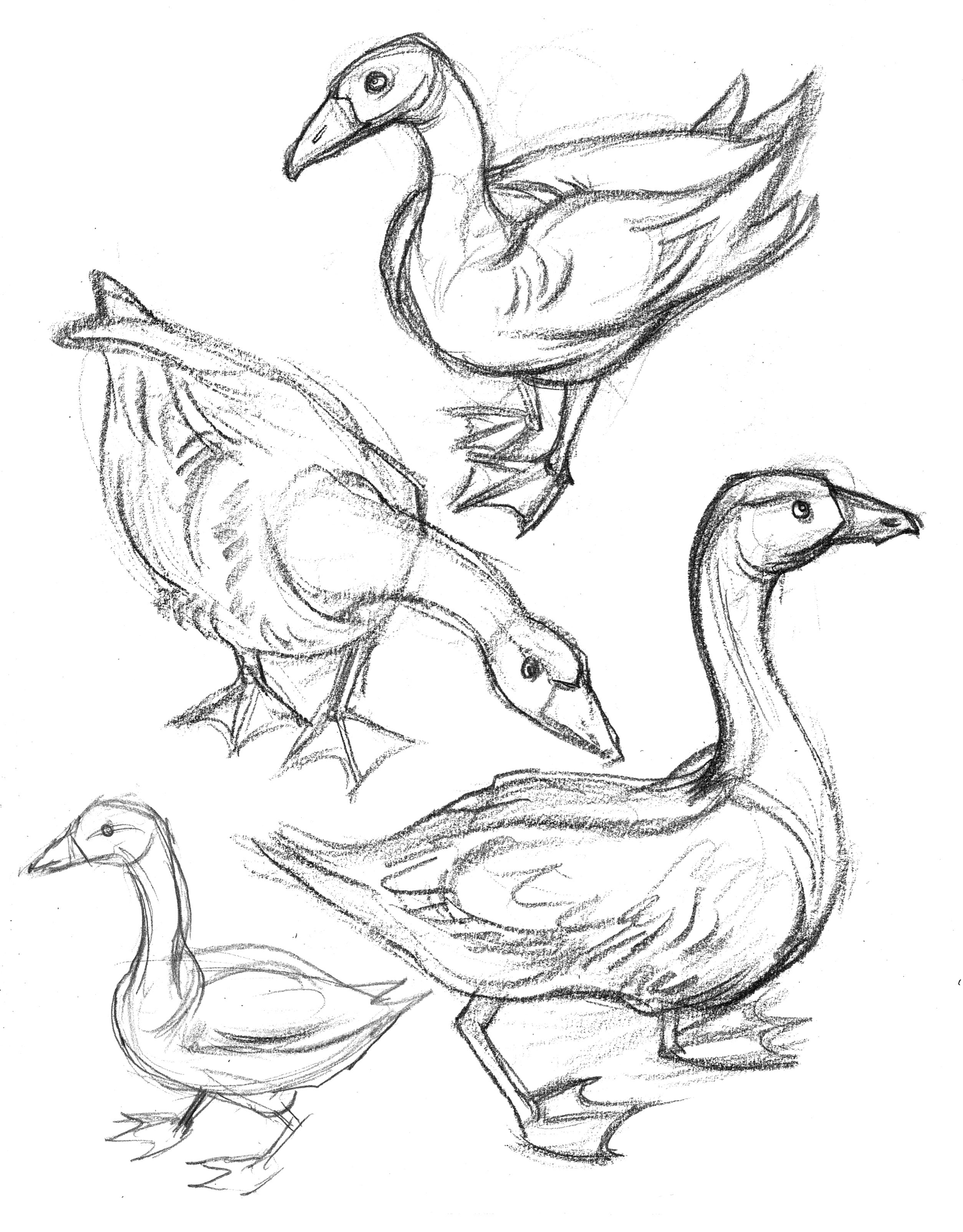 2508x3208 Garygeraths Animal Drawing