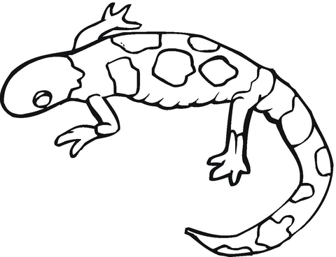 480x368 Colorful Gecko Coloring Page Free Printable Coloring Pages