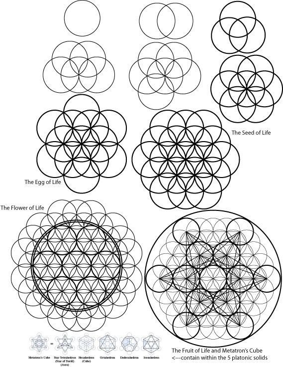569x736 A Visual Description Of How To Draw The Flower Of Life And Beyond
