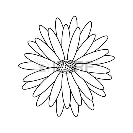 Gerber Daisy Drawing