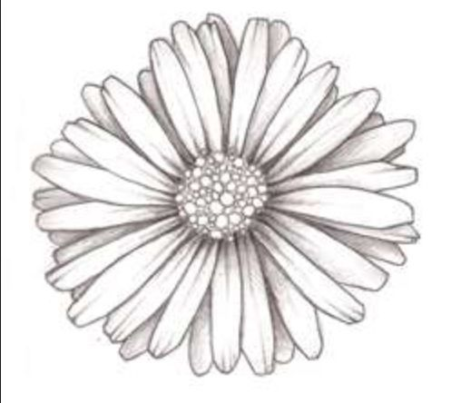Gerber Daisy Drawing At Getdrawingscom Free For Personal