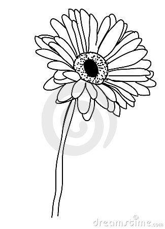 Gerbera Daisy Drawing